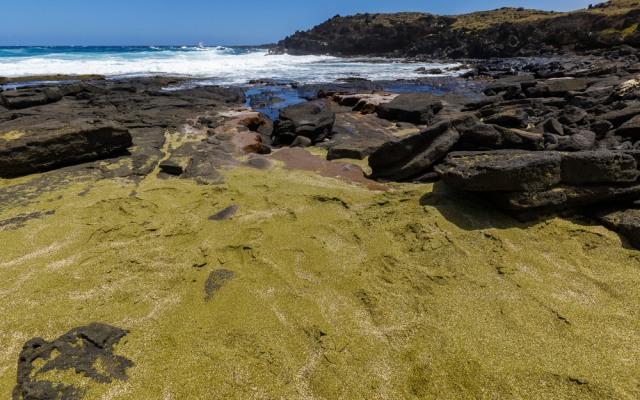 Tak Hanya Putih, 4 Pantai Ini Sajikan Pasir Berwarna Hijau nan Unik (66527)