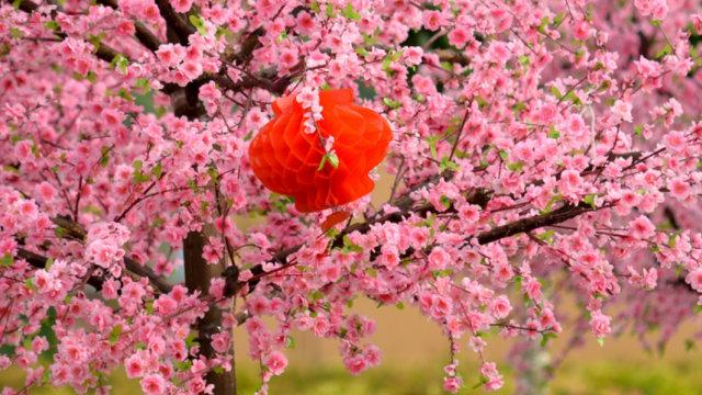 Mei Hua - bunga imlek