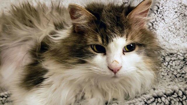 Fluffy, Kucing yang Sempat Membeku di AS