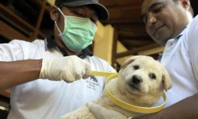 38+ Anjing rabies jika menggigit manusia akan menularkan rabies yang akan menyerang terbaru