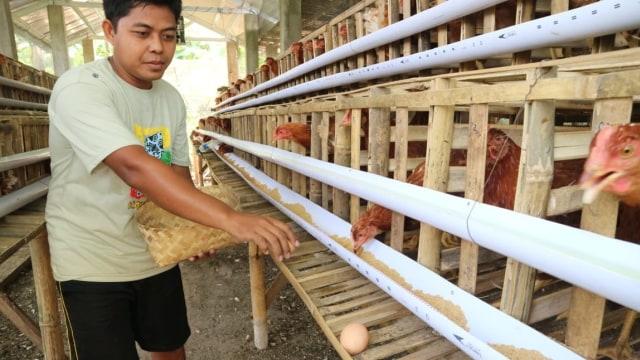 DPR Kritik Kementan Soal Anggaran Program Ayam Lokal Rp 67 Ribu per Ekor (75954)