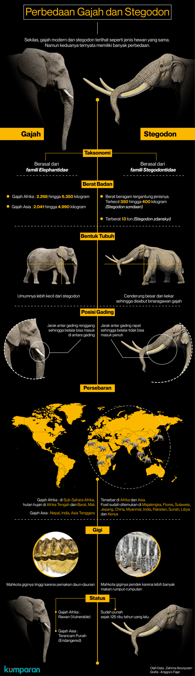Memahami Perbedaan Gajah Modern dan Stegodon (62799)