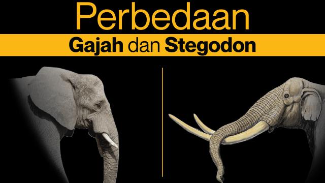 Memahami Perbedaan Gajah Modern dan Stegodon (62798)