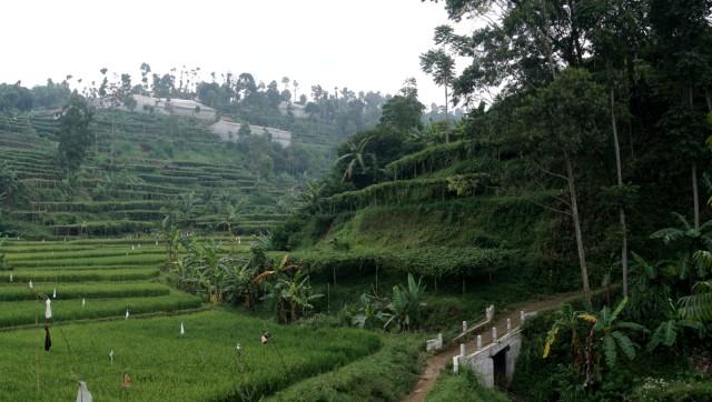 KONTEN SPESIAL SESAR LEMBANG, Suasana lahan pertanian yang berada di kawasan sesar lembang
