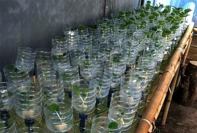 Botol Plastik Bisa Dijadikan Wadah Bertanam Hidroponik