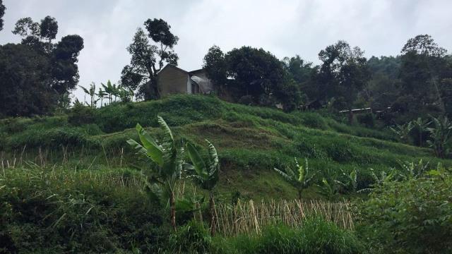 KONTEN SPESIAL SESAR LEMBANG, Kampung Muril Rahayu