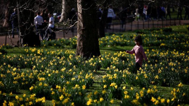 Foto: Menikmati Keindahan Musim Semi di London (978748)