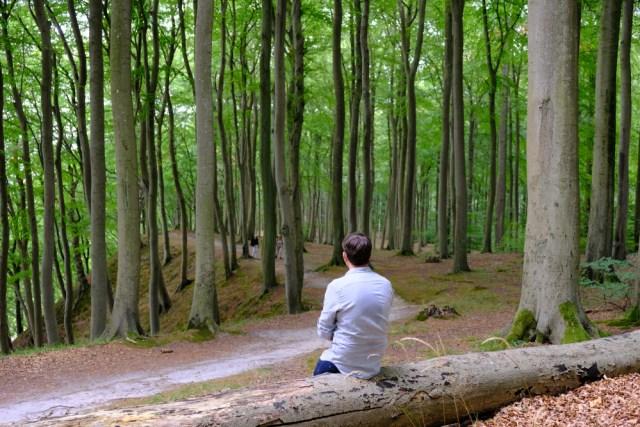 Rp 10 Miliar vs Pohon di Hutan, Pilih Mana? (121)