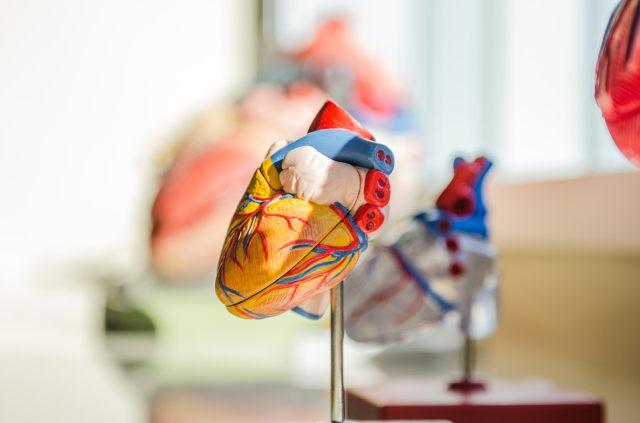 heart-2607178_960_720.jpg