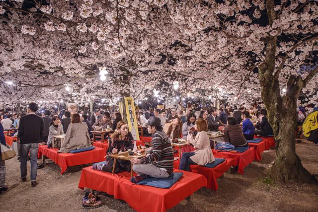 Foto: Melihat Mekarnya Bunga Sakura di Tengah Wabah Virus Corona (1230249)