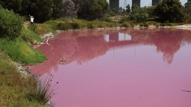 Danau merah muda di Melbourne, Australia