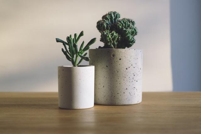 Tips Dekorasi: 5 Tanaman Hias untuk Meja Kerja Agar Tampak Manis  (4362)