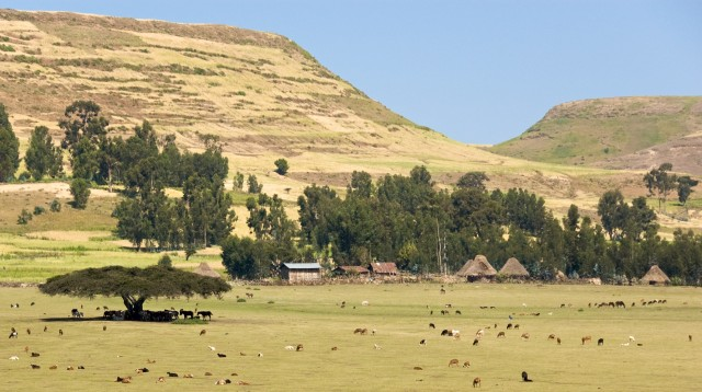 On_The_Road_To_Simien_Mountains_National_Park,_Ethiopia_(2446794591).jpg