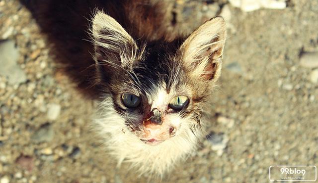 5 Cara Mengusir Kucing Kampung Yang Ampuh Tak Harus Menyakiti Kumparan Com