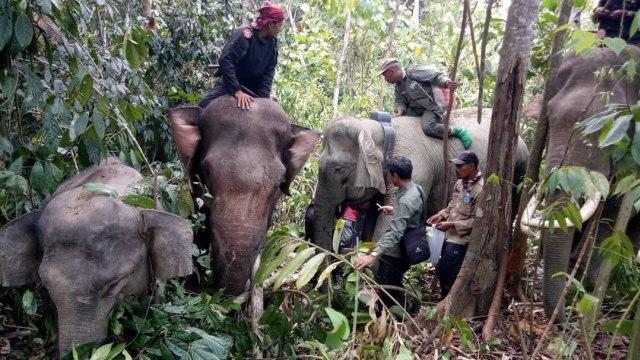 BKSDA Cari Solusi Atasi Konflik Gajah-Manusia di Aceh Utara (309890)
