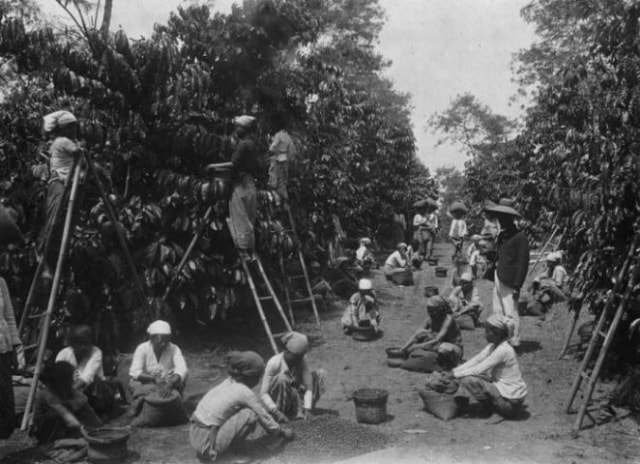 Menguak Sejarah Kopi di Indonesia (270438)
