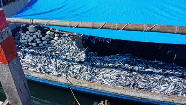 KKP Siapkan Aturan Baru untuk Jaga Produksi Tuna Cakalang Tongkol (267058)