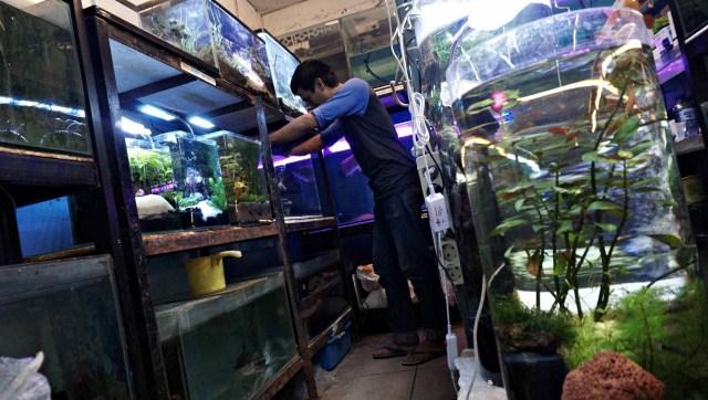 Kawasan Promosi Ikan Hias DKI Jakarta