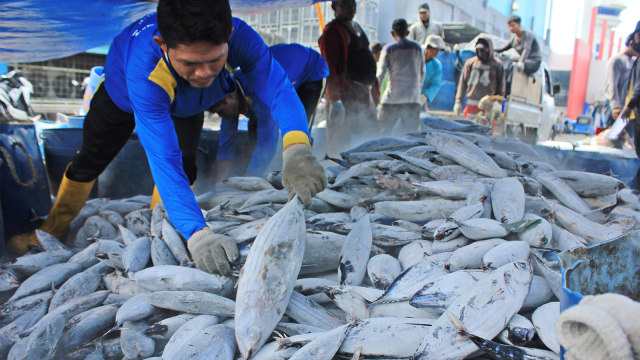 nelayan, ikan