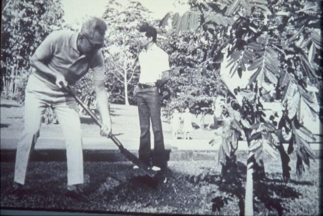 com-Lee Kuan Yew menanam pohon mahoni di Hari Menanam Pohon tahun 1990.