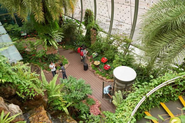 com-Butterfly Garden, salah satu taman dalam bandara di Changi.