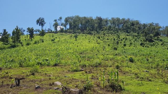 Cerita Petani di Dompu yang Usir Hama Pakai Bantuan Dukun (584658)