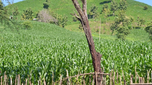 Cerita Petani di Dompu yang Usir Hama Pakai Bantuan Dukun (584659)