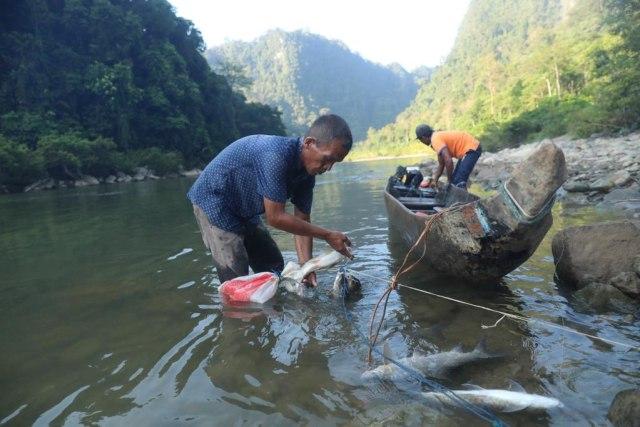 Berburu Ikan Kesukaan Sultan di Krueng Teunom, Aceh (103018)