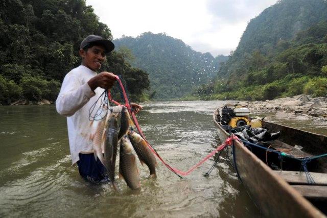Berburu Ikan Kesukaan Sultan di Krueng Teunom, Aceh (103020)