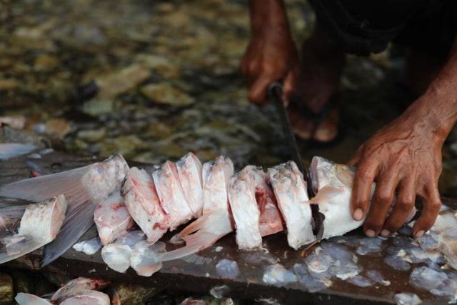 Berburu Ikan Kesukaan Sultan di Krueng Teunom, Aceh (103021)