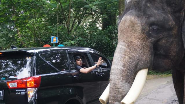 com-Den Dimas melihat gajah di Safari Ride