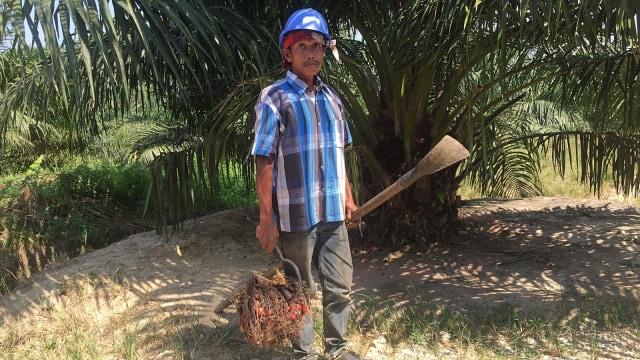Menimbang Peluang Indonesia Menang Lawan Uni Eropa soal Sawit (87732)