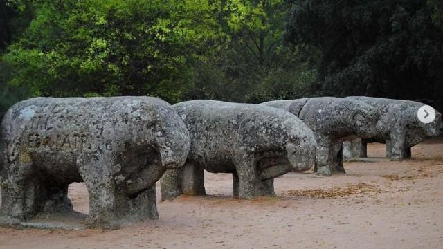 Banteng dan Spanyol, Warisan Budaya yang Menarik tapi Berpolemik (971)