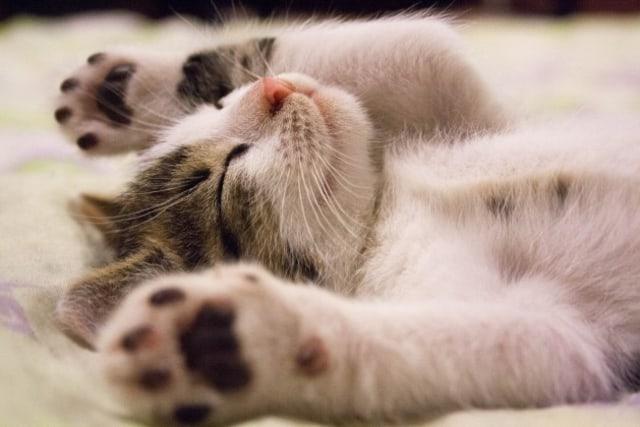10 Foto Anak Kucing Super Lucu Ini Bakal Bikin Kamu Semangat Lagi