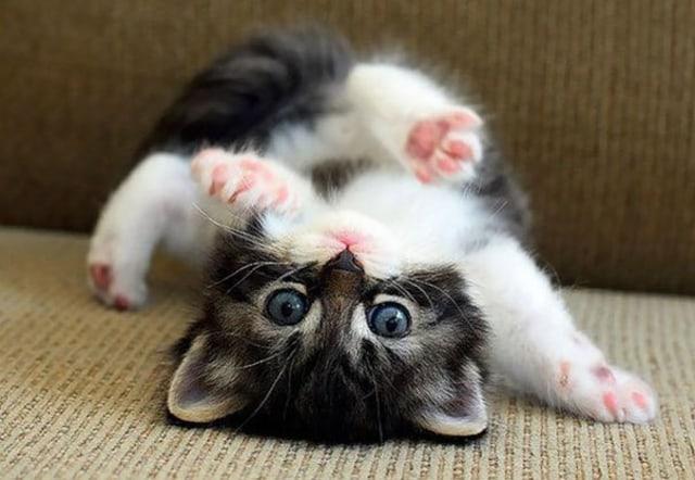 10 Foto Anak Kucing Super Lucu Ini Bakal Bikin Kamu Semangat