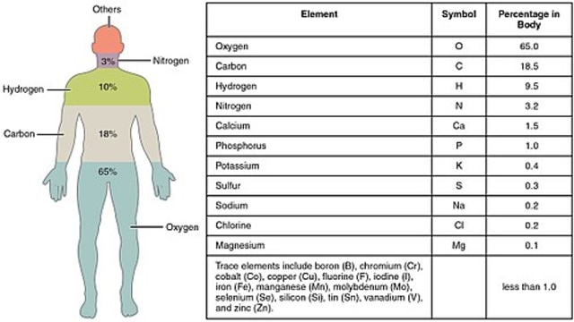 500px-201_Elements_of_the_Human_Body-01.jpg
