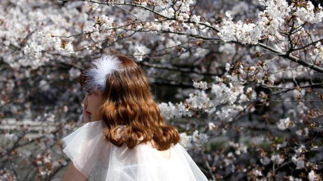 Bunga Sakura, Tokyo, Jepang