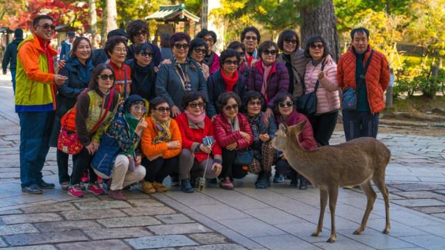 Rombongan wisman berfoto bersama dengan rusa liar di Nara, Jepang