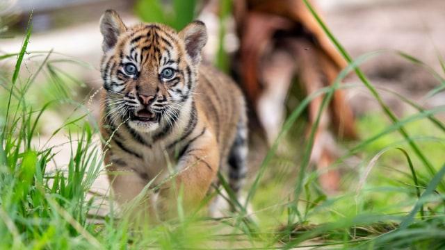 45++ Gambar hewan terancam punah di indonesia terupdate