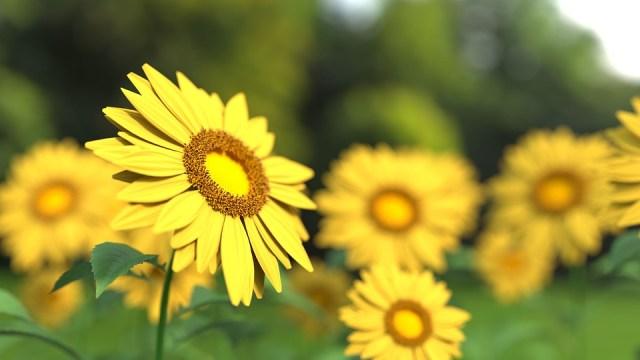7 Quotes Bunga Bahasa Inggris Dan Artinya Cocok Buat Caption Kumparan Com