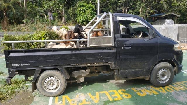 Pencuri 20 Kambing Diringkus Polisi Kotabaru (278158)