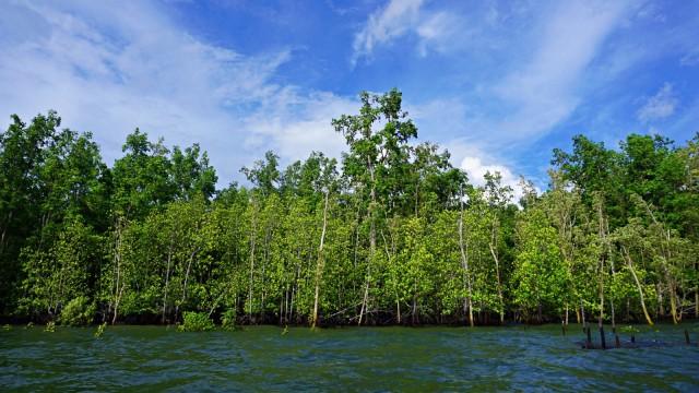 Mangi Mangi, Teluk Bintuni, Papua Barat