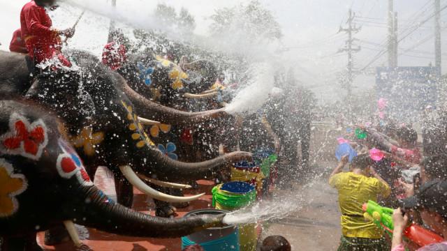 Gajah, Festival Songkran di Ayutthaya, Thailand