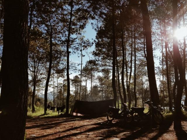 Hiking Santai untuk Pemula di Gunung Putri Lembang (19199)