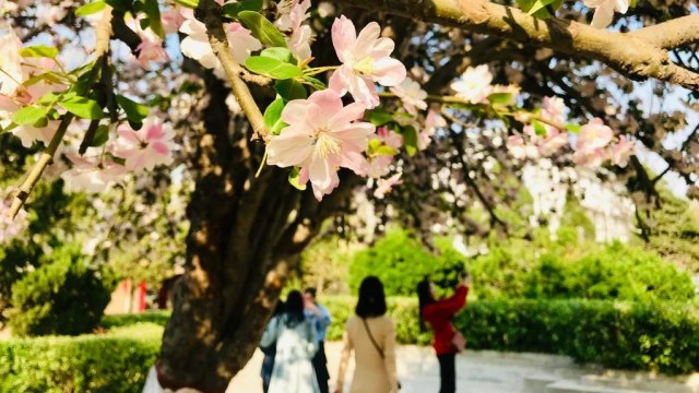 Acehkini Jalan-jalan: Ying Hua, Mewarnai China di Musim Semi  (714)