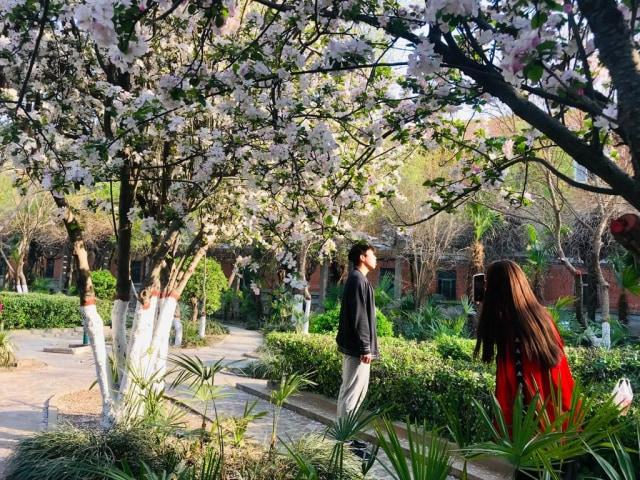 Acehkini Jalan-jalan: Ying Hua, Mewarnai China di Musim Semi  (717)