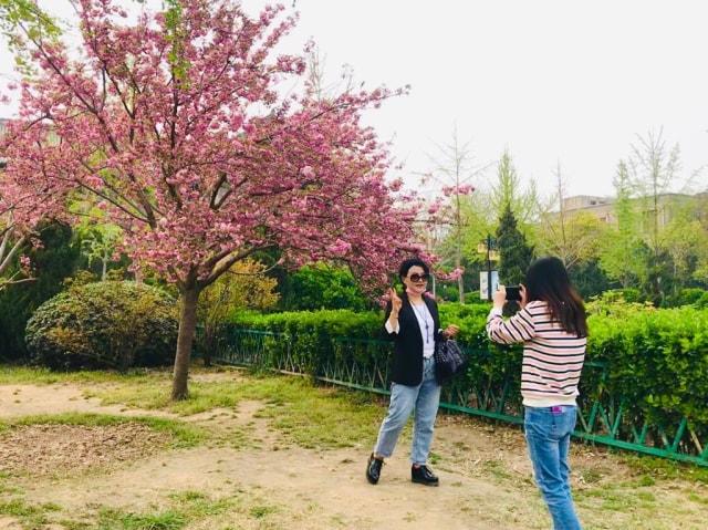Acehkini Jalan-jalan: Ying Hua, Mewarnai China di Musim Semi  (733)