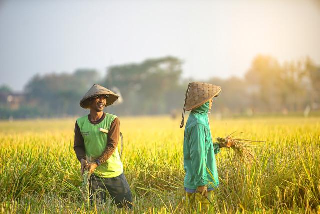 Petani Beromzet Rp 400 Juta per Bulan Bisa Pilih Tarif PPN 1 Persen -  kumparan.com