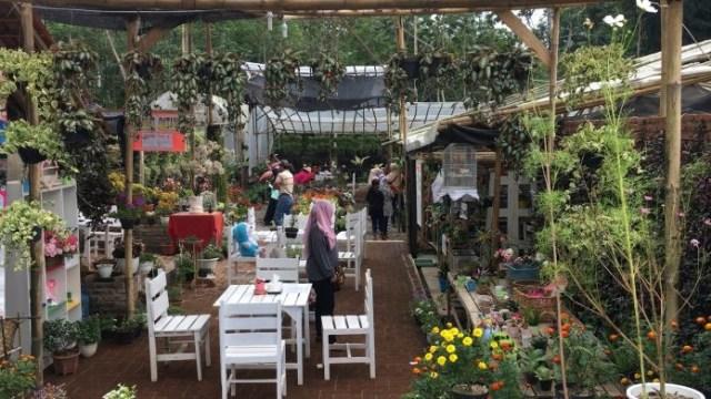 Kebun Bunga Candipuro Lumajang