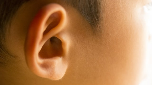 Ilustrasi telinga anak